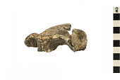 view KNM OG-45,500, Early Human, Fossil Hominid digital asset number 1