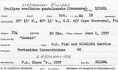 view Ovalipes stephensoni Williams, 1976 digital asset number 1