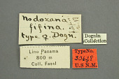 view Nodozana fifina Dognin, 1913 digital asset number 1