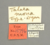 view Talara mona Dyar, 1914 digital asset number 1