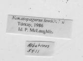 view Nematopagurus lewinsohni Türkay, 1986 digital asset number 1