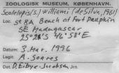 view Scolelepis (Scolelepis) williami (De Silva, 1961) digital asset number 1