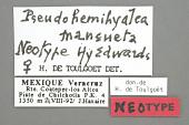 view Halisidota mansueta Edwards, 1884 digital asset number 1
