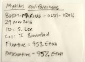 view Mytilus californianus Conrad, 1837 digital asset number 1