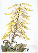 view Vriesea imperialis Carrière digital asset number 1