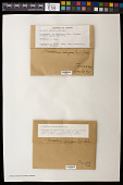 view Myelochroa irrugans (Nyl.) Elix & Hale digital asset number 1