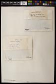 view Myelochroa leucotyliza (Nyl.) Elix & Hale digital asset number 1
