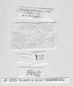 view Nematopagurus lepidochirus (Doflein, 1902) digital asset number 1