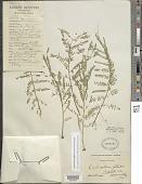 view Erythrostemon gilliesii (Wall. ex Hook.) Klotzsch digital asset number 1