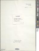 view Anacystis aeruginosa digital asset number 1