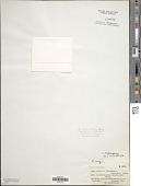 view Anabaena licheniformis digital asset number 1