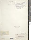 view Microcoleus lyngbyaceus Kütz. ex Forti digital asset number 1