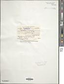 view Oscillatoria retzii C. Agardh digital asset number 1