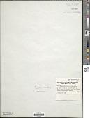 view Microcoleus vaginatus (Vaucher) Gomont ex Gomont digital asset number 1