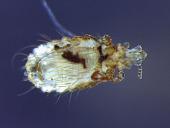 view Tamias striatus lysteri digital asset number 1