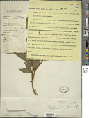 view Melastoma polyanthum Blume digital asset number 1
