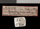 view Chaetodipus fallax inopinus digital asset number 1