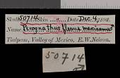 view Perognathus flavus mexicanus Merriam, 1894 digital asset number 1
