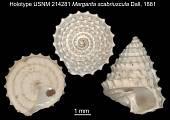 view Margarita scabriuscula Dall, 1881 digital asset number 1