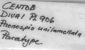 view Prionospio unilamellata Sigvaldadottir & Desbruyères, 2003 digital asset number 1