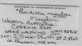 view Psolidiella maculosa O'Loughlin, 2000 digital asset number 1