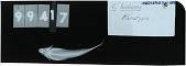view Callionymus hudsoni digital asset number 1