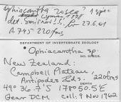 view Ophiacantha cf. rosea Lyman, 1878 digital asset number 1