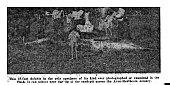 view Tasmacetus shepherdi Oliver, 1937 digital asset number 1