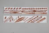 view Paper Strips, Prints digital asset number 1