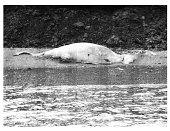 view Cetacean sp. digital asset number 1