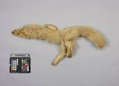 view Fur Skin Of Fur String digital asset number 1