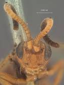 view Plectocryptus popoffensis digital asset number 1