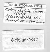 view Heterorhabdus farrani Brady, 1918 digital asset number 1