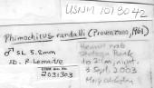 view Phimochirus randalli (Provenzano, 1961) digital asset number 1
