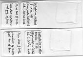 view Bathydrilus medius Erseus, 1983 digital asset number 1