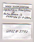 view Lophothrix humilifrons Sars, 1905 digital asset number 1