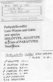 view Parhyalella ruffoi Lazo-Wasem & Gable, 2001 digital asset number 1