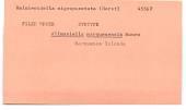 view Allmaniella marquesensis Monro, 1928 digital asset number 1