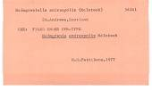 view Malmgrenia andreapolis McIntosh, 1876 digital asset number 1