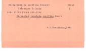 view Harmothoe lunulata pacifica Monro, 1928 digital asset number 1