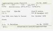 view Lumbrinerides acuta (Verrill, 1875) digital asset number 1