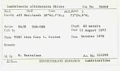 view Lumbrineris albidentata Ehlers, 1908 digital asset number 1