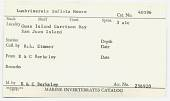 view Lumbrineris inflata Moore, 1911 digital asset number 1