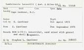 view Lumbrineris latreilli Audouin & Milne Edwards, 1934 digital asset number 1