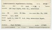 view Lumbrineris magalhaensis Kinberg, 1865 digital asset number 1