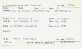view Armandia maculata (Webster, 1884) digital asset number 1