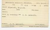 view Arenicola ecaudata Johnston, 1865 digital asset number 1