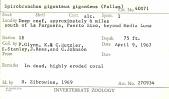 view Spirobranchus giganteus giganteus (Pallas, 1766) digital asset number 1