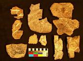 view Glyptodontopelta mimus Ford, 2000 digital asset number 1