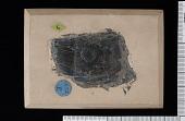 view Hemicystites ? carbonarius Bassler digital asset number 1